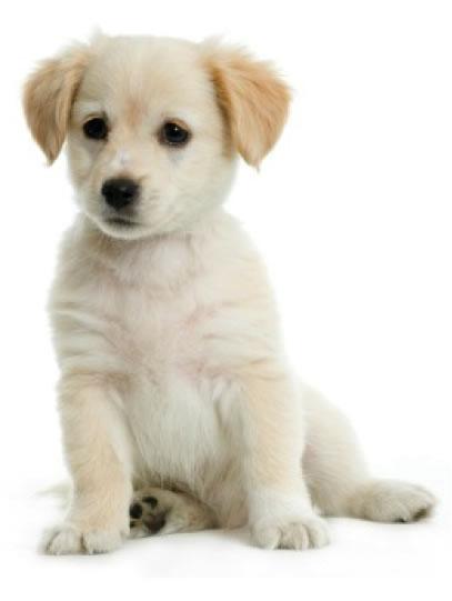 vegan puppy