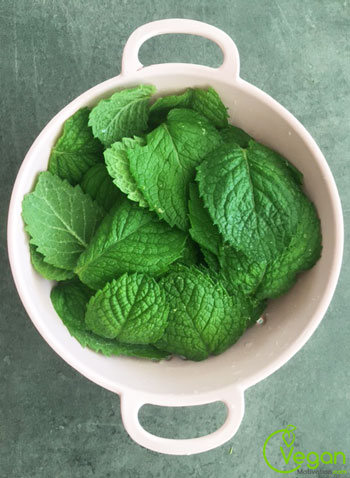 how to harvest mint