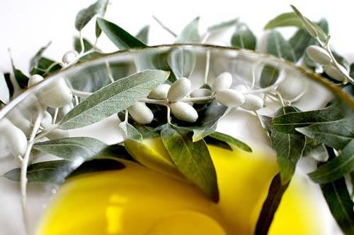 olive-leaf-oil-healing