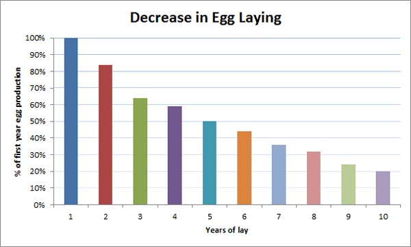 chicken-egg-production-decline