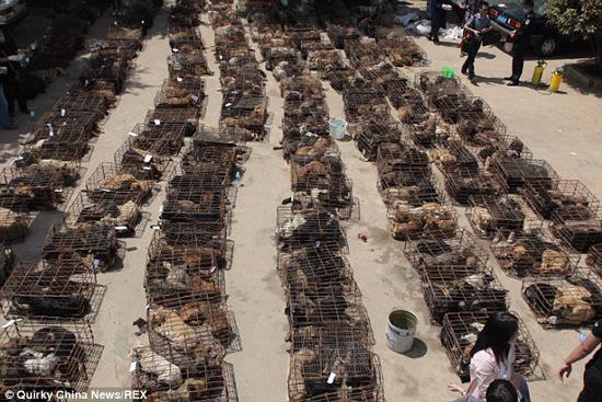 china-dog-meat-trade